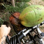 Collecting coconuts for my smoked coconut chili aioli for @slowfoodmiami…