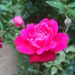 @paradisefarms for the night, magical #bedandbreakfast stay on an #organicfarm,…